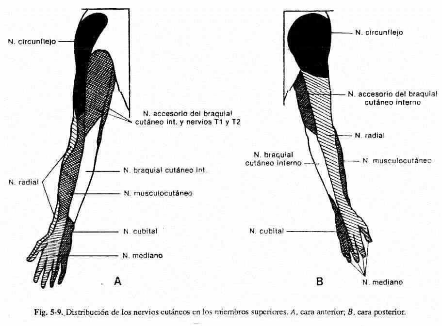 Dónde está el mejor dolor detras de la rodilla