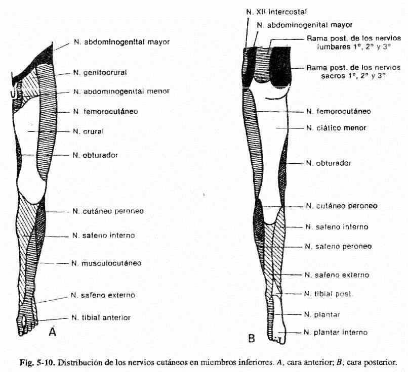 dolor en la parte inferior de la pierna quemante